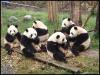 pandas_chengdu17