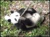 Base Pandas Geants Chengdu