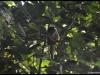 Jungle Amazonie